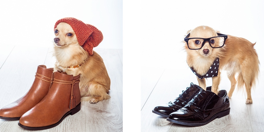 shooting chien mode chaussures lunettes